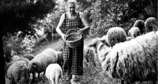 Francesca con le sue pecore brogna